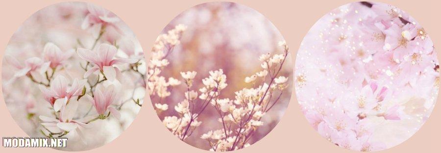 Фото цветущего бледного Кизила в природе