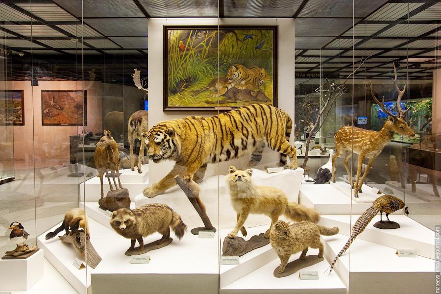 москва музей дарвина фото кажется