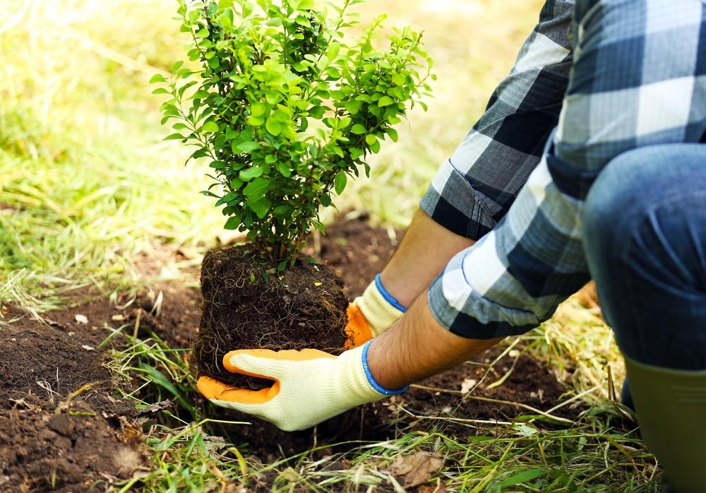 Как посадить деревья и кустарники