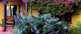 Вьющиеся растения на Вашем участке