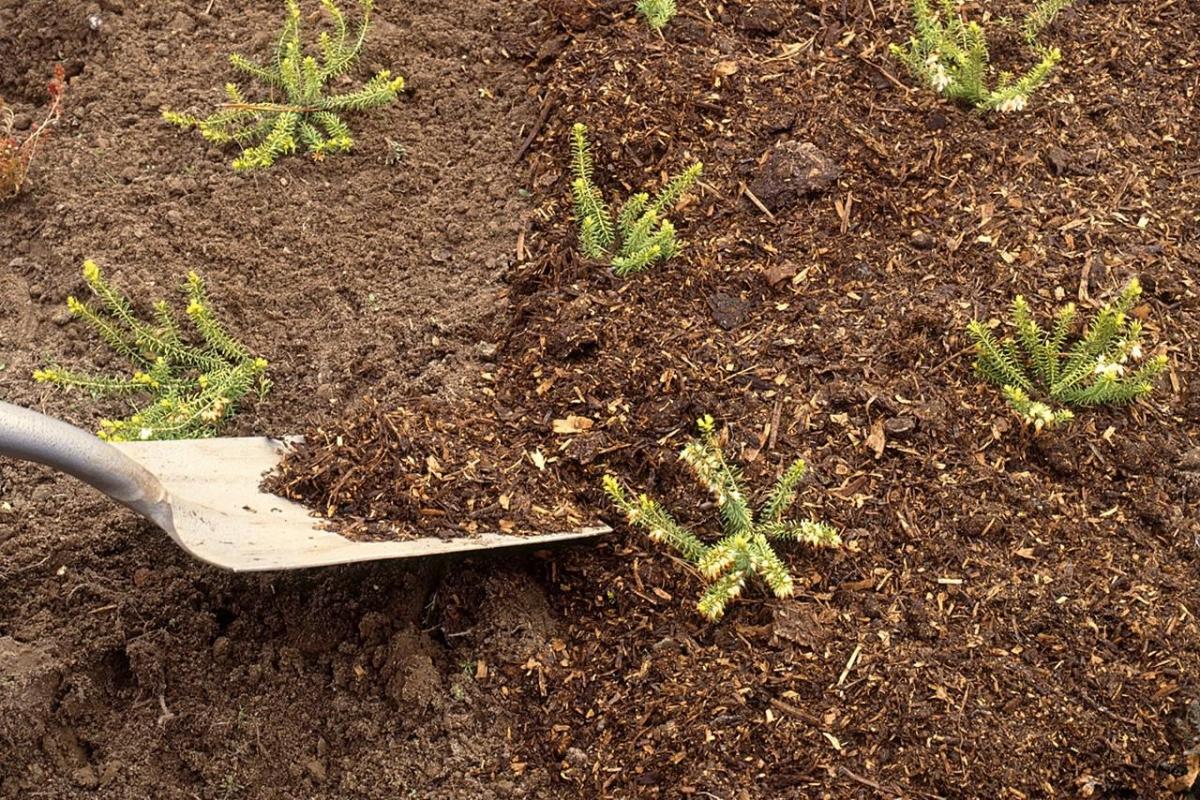 Как замульчировать почву