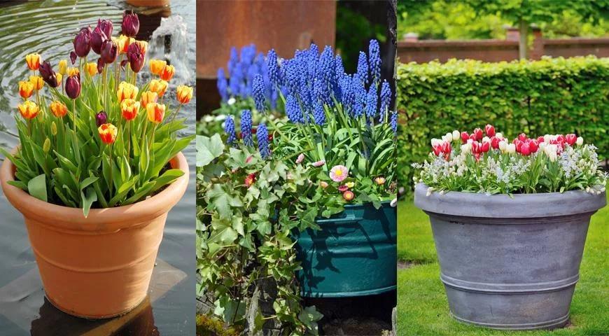 Как посадить цветы в различные емкости
