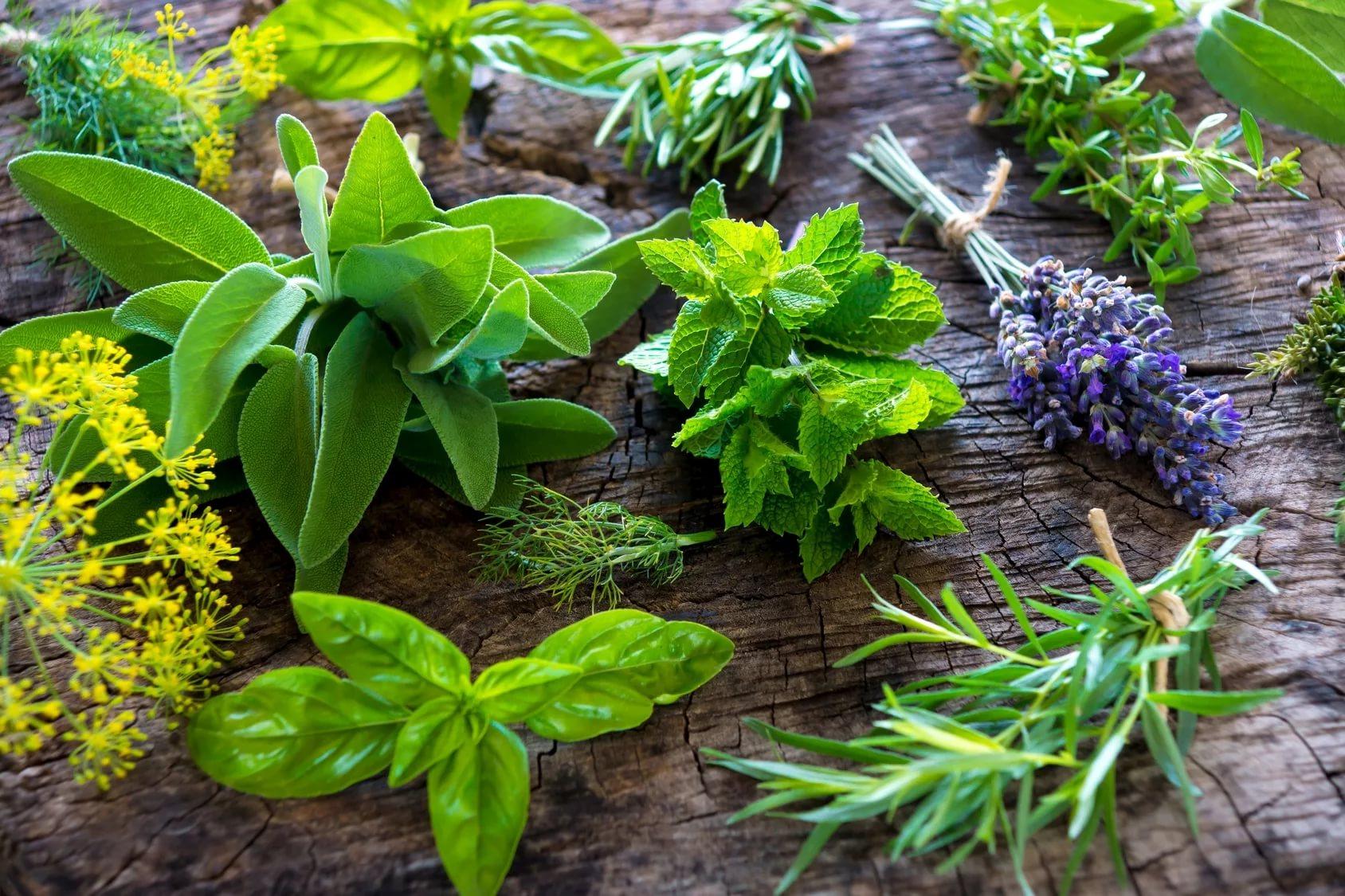 Пряные и ароматические растения