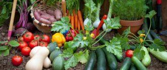 пользу приносят нам огородные растения