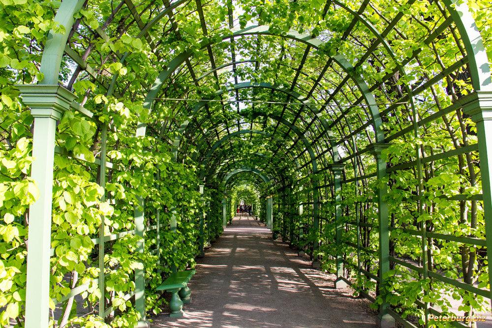 Летний сад в санкт-петербурге картинки