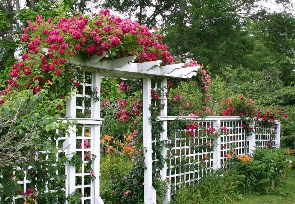 Перголы, решетки и арки для вьющихся растений