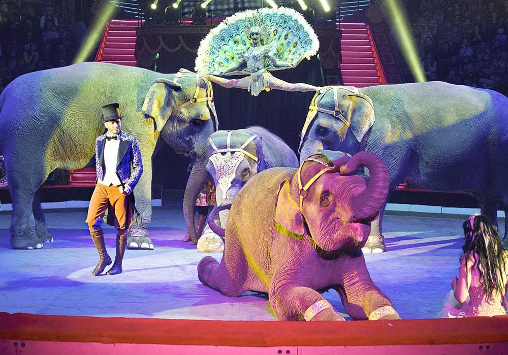 цирк на цветном бульваре в москве картинках