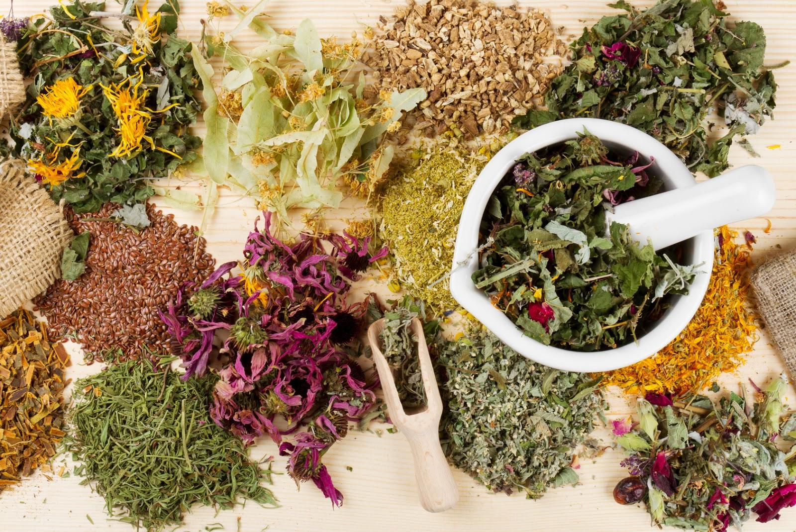 Лекарственные травы картинки